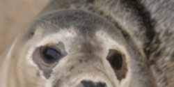 Canada: End the Seal Hunt Now!