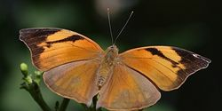 Ask Florida To Do More To Save Rare Butterflies Threatened With Extinction!