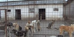 Close down dogs deathcamps of Romania!