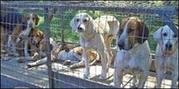 Include Hunting Dogs in S. Carolina Animal Welfare Law