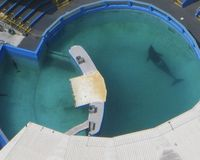 Urge NMFS To Rectify Exclusion of Lolita from the ESA and BRING LOLITA HOME!