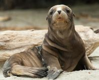 Oregon- Stop Killing Sea Lions
