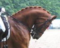 The Cruelty of Horse Dressage