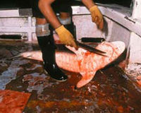 Ban Shark Fin Soup in ALL OF the US.... Hawaii ban began July 2010