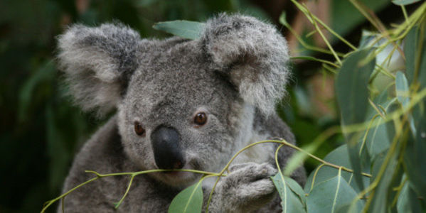 Stop Coal Mine in Australian Nature Reserve