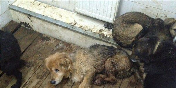 On the 25/11/2013 the auction for murder of 2489 neglected dogs and 102 cats who lives in the Kozhuk