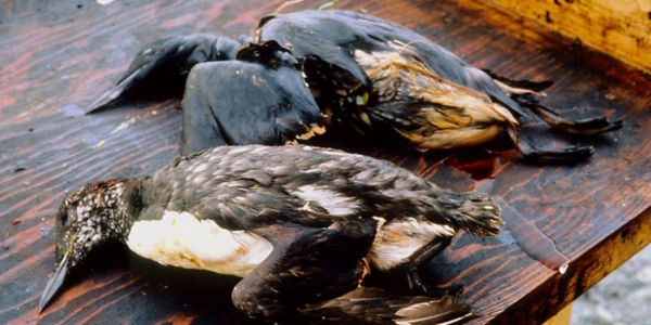 Protect the Arctic from an Oil Spill Disaster