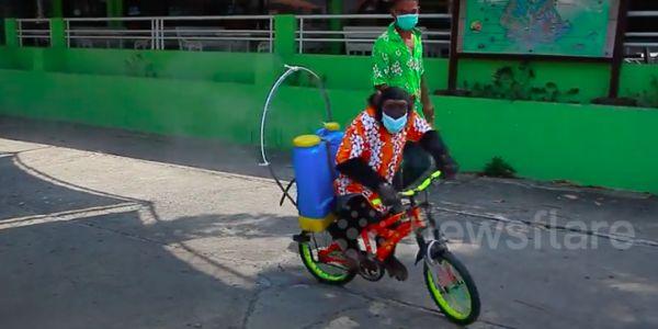 chimpanzee on a bike