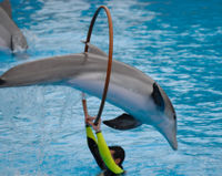 Don't Include Dolphins in Vast New Singapore Aquarium