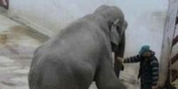 Romania- Send Tania the Zoo Elephant to a Sanctuary