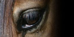 Tell Congress to Stop Horse Slaughter!