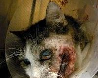 Justice for Muffin~ Horrific Owner Abuse