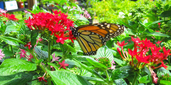 Tell City Of Miami: Plant A Native BUTTERFLY GARDEN Instead Of Another  Structure In A Park Space!