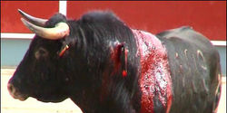 End Bullfighting Worldwide