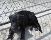 Demand change at the Coffee County/Manchester TN dog pound.