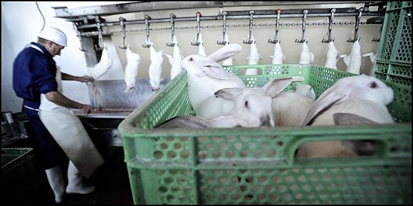 Tell Fendi to Stop Using Rabbit Fur