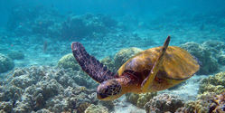 Protect Endangered Sea Turtles in Australia