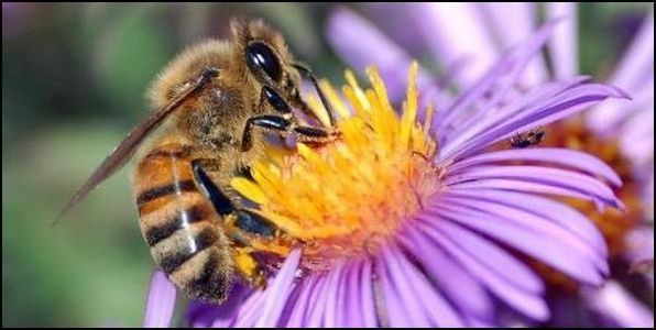 Ban the Pesticide Killing Honeybees