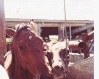 Mare and foal awaiting slaughter
