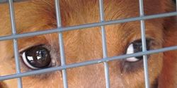 Please demand the end of using beagles for vivisection and cruel animal experiments