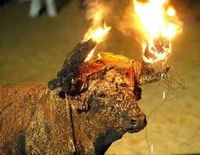 Bulls BURNT CUT AND TORTURED