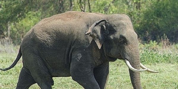 Demand that Myanmar and China crackdown on the sale of Ivory and save the Elephants!!