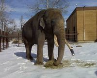Demand that The Calgary Zoo reconsider the relocation of elephants