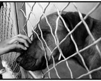 Stop Killing Homeless Pets in Animal Control (GA)