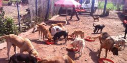 Stop animal abuse in Morocco and support the AHPAE Shelter