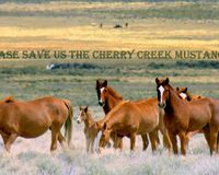SAVE THE CHERRY CREEK NEVADA WILD HORSES