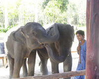 Release Baby Elephants Paloh and Jeli To Sanctuary