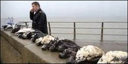 Protect UK Sea Birds from Hazardous Chemicals