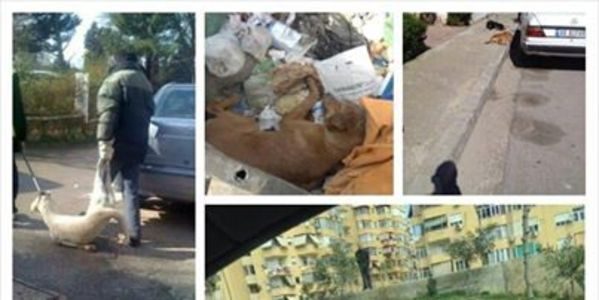 STOP THE SLAUGHTERING OF THE STRAY DOGS BY TIRANA MUNICIPALTY!