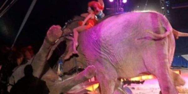2e03479cb21a78 petition: Time For Germany To Ban Exotic Animals In The Circus!! Enough Is  Enough!!, Germany