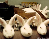 South Africa: Stop the unnecessary and cruel testing of cosmetics on animals