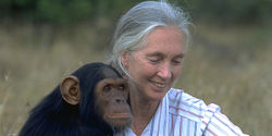 Thank Jane Goodall for 50 Years of Remarkable Activism