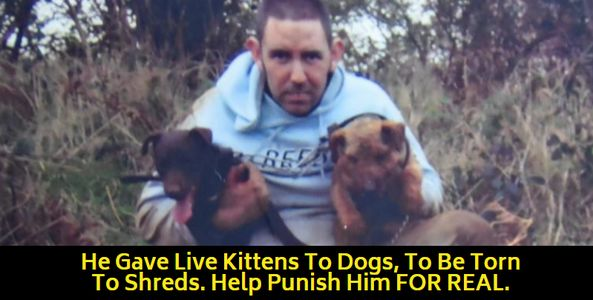 animal abuser with fighting dogs