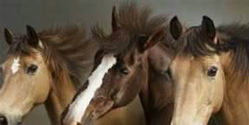 Stop Missouri Horse Slaughter Factory