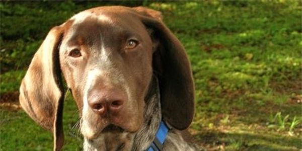Get Justice for Dutch the GSP