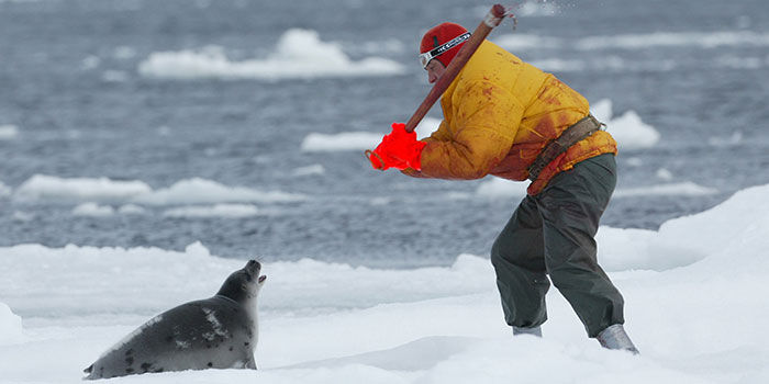 seal hunting should be banned in canada I bet we can find 1,000,000 people who want canada to ban seal hunting 8,979 likes 1 talking about this community.