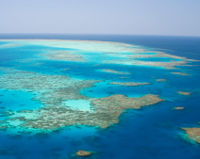 Ban Lethal Herbicide Near Great Barrier Reef