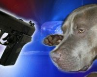 Tyson- Pit bull Shot By San Diego Police While On Walk WW