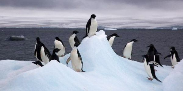 Protect Penguins from the Effects of Climate Change