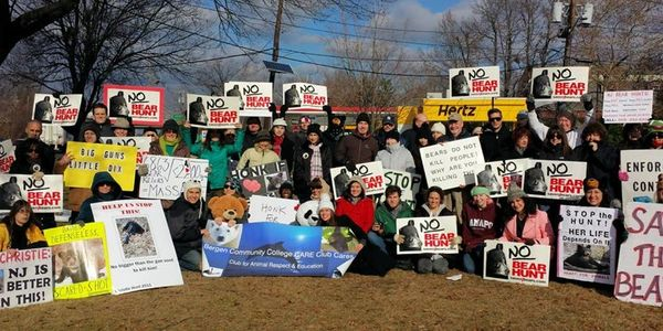 Stop the 2014 New Jersey Bear Hunt