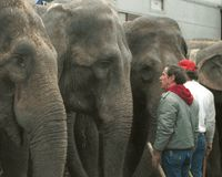 Stop Ringling Bros.' Expansion Near New York City - No Animal Abuse!