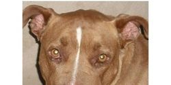 Saginaw County Animal Care Center: Stop breed-specific policy and the murder of dogs