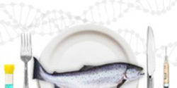 Tell the FDA: Just Say No to GE Salmon