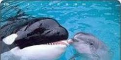 Ban Whales and Dolphins in Captivity and Establish a Global Whale and Dolphin Sanctuary.
