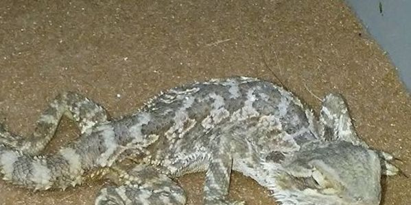 Petco Reptile Guarantee