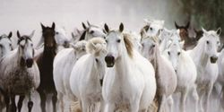 : Stop Selling America's Wild Horses for Slaughter